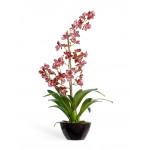 Горшечные растения, кусты и мох