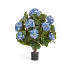 Гортензия тёмно-голубая куст Макси в-70, д-50 см в горшке 2/2