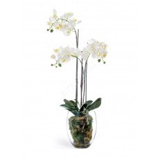 Орхидея Фаленопсис белая куст 85 см 3 ветви в стекл.вазе с мхом, корнями, землёй 1/1